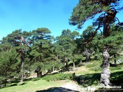 Siete Picos_La Sierra del Dragón; ruta costa vasca hayedo irati paseos por urbasa